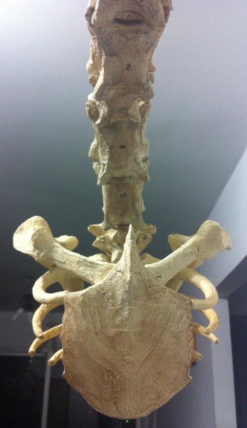 neck_mount
