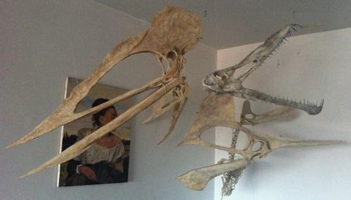 pterosaur_family