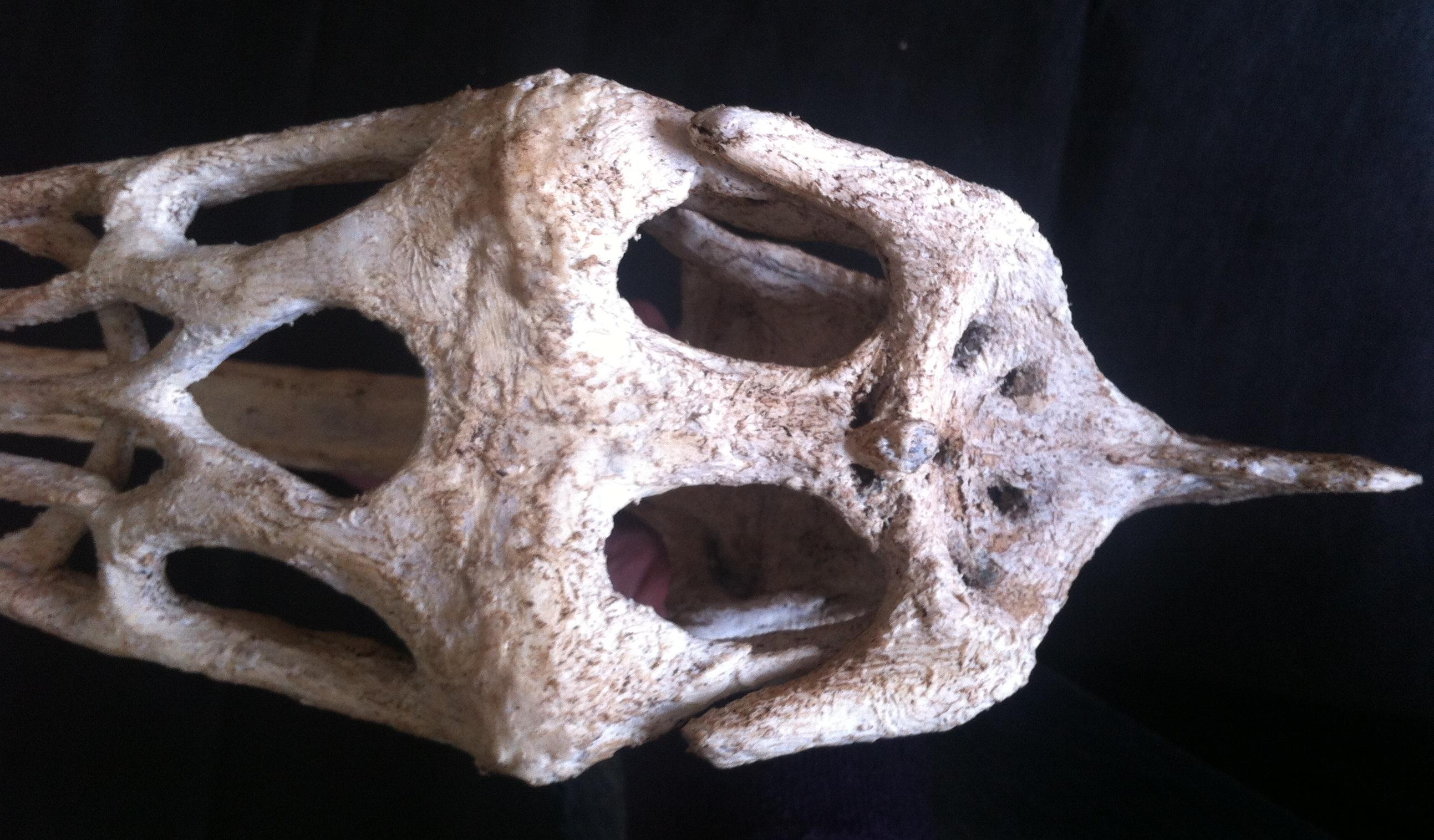 Thalassodromeus Skull