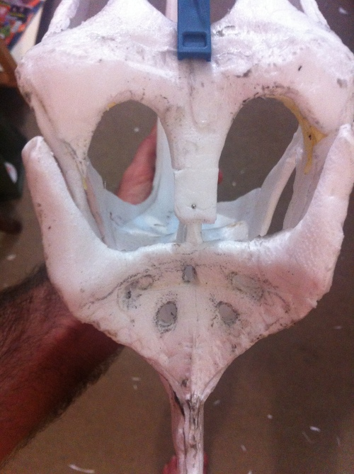 posterior skull details 2