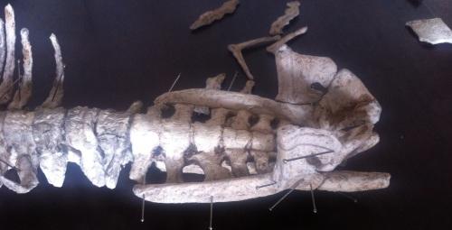 pelvis and sacrum
