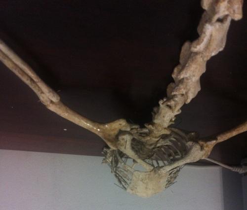 ventral body 2